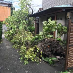 台風の強風で!見たことの無い光景が!