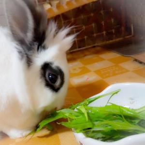今日のお野菜タイム♪