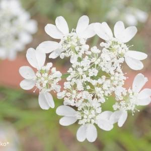 優しい花たち