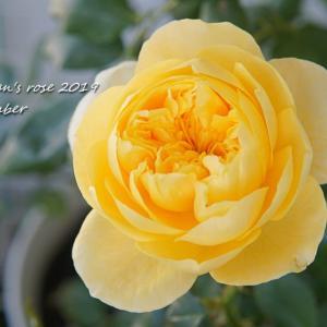 ボーリングしないバラと花持ちのいいバラ