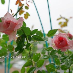 雨の中の2番花達♡