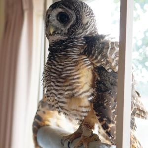 2鳥は何をそんなに恐れているのか?