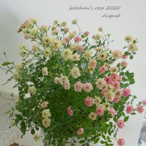 極小ミニバラとグリーアイスの花がら摘み/ETちゃん