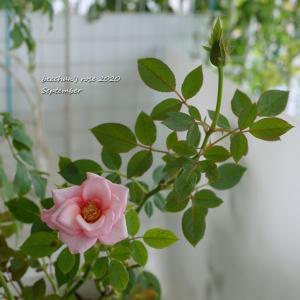 風が強い(/TДT)/ 3カ月と10日ぶりの美容院