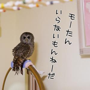 サンバリア100/頑固なモネちゃん(/_;)