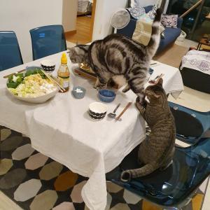 ぱずたんが繋いでくれた縁でおうちムーカタ会