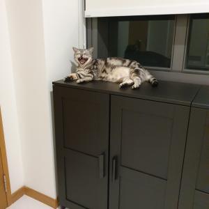 キッチン横にIKEAのキャビネットを置きました。