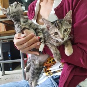 子猫の保護施設 Kitten Sanctuary に行ってきました。