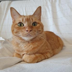 猫と、背景の色