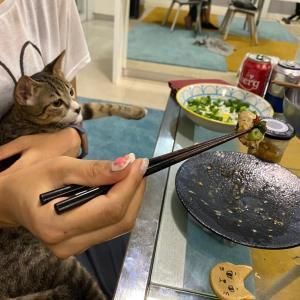 おうちで広島お好み焼き。パズー二世あらわる