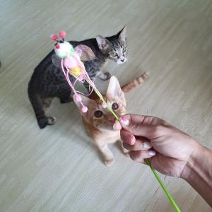 日本に帰れないので猫用品を楽天で買って転送してみようと思います。