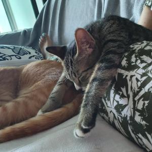 猫(と人間も)眠たくなる動画で独特の寝かたをする猫