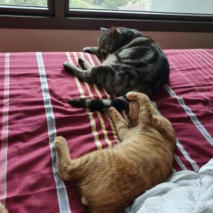 ぱずたん、しっぽで自ら子猫指導