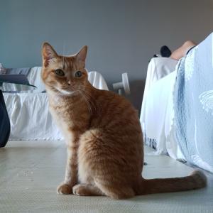 シータさんと子猫のソーシャルディスニャンス