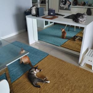 キッチンに付いている謎の鏡の使い方