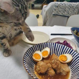 鶏肉もはんぺんもサーモンも食べたいぱずたん