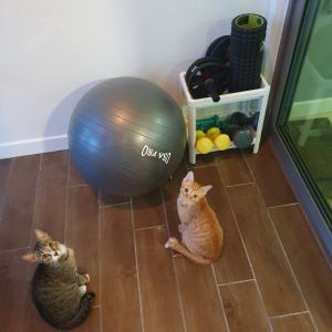 ジムは開いたけど、我が家は引き続き猫と宅トレです。