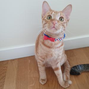 ダイソーで猫の首輪を買って三兄弟に着けてみました。