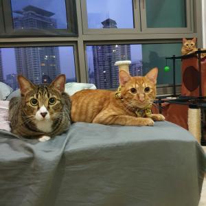 猫7匹と暮らすアラフォーのロックダウン中のとある1日