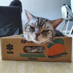 ついにぱずたんが、マレーシアのマンゴーの箱に入った!