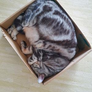 2種類のマンゴーの箱を使いこなすぱずたん