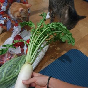 お野菜をデリバリーしたら葉っぱ付きの大根が来た♡