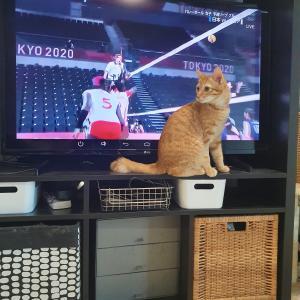 オリンピック観戦に忙しい飼い主と猫