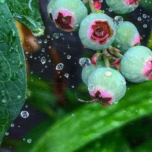 雨と植物の表情