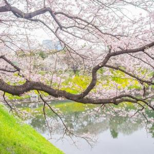 千鳥ヶ淵の桜に願いをこめて