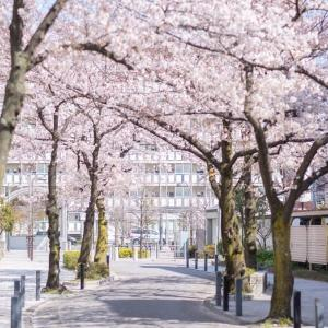 東京の桜の花へ