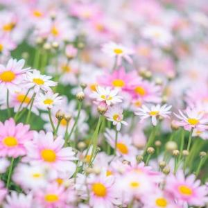 WEBにお花を***
