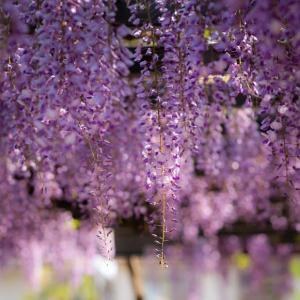 紫色の記憶