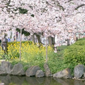 リフレイン*記憶の中の桜