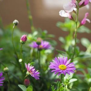 野に咲く花のように***