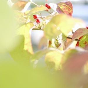 秋のBGM