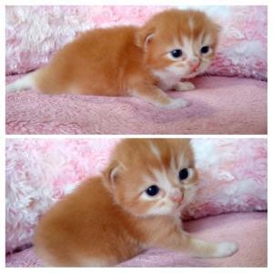 サンゴちゃんの赤ちゃん、3週間目🐾😻