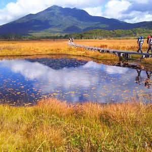 草紅葉の尾瀬の湿原