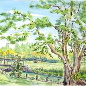 夏と秋が同居する水元公園、緑陰でのスケッチです