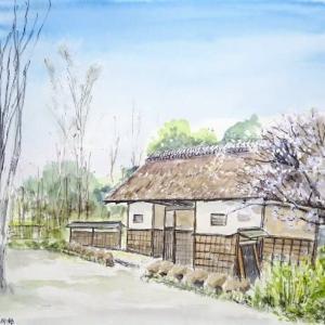 梅のシーズン到来、大賑わいの府中郷土の森博物館のスケッチです