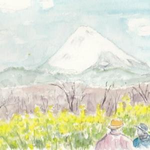 富士山と菜の花の景観です
