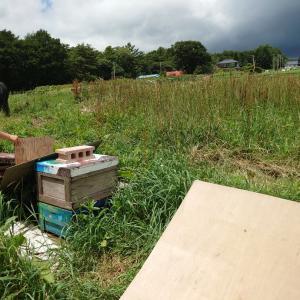 蜜蜂が一生で集めるハチミツはティースプーン1杯なんだとか。