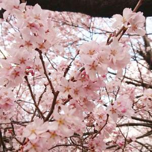 【信州だより】2020年4月号 春の訪れ