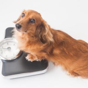 妊娠中期と後期の体重増減が違い過ぎる。