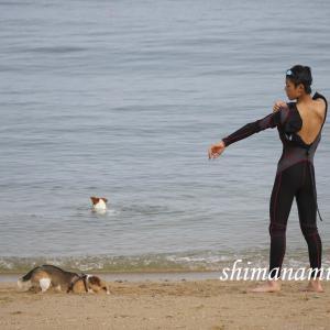 犬と一緒にトライアスロン、スイム練習