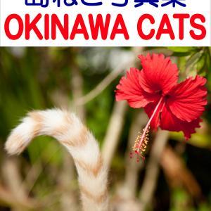島ねこ写真集 OKINAWA CATS
