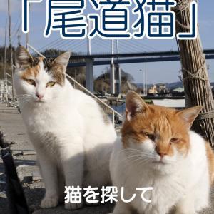 写真集「尾道猫」