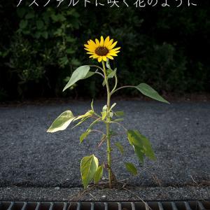 花の写真集「応援花」アスファルトに咲く花のように