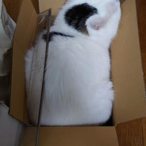 箱に入る好き好き