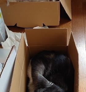 昨日の箱に