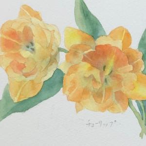 八重咲きチューリップを描く〜♪